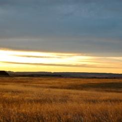 prairie 004